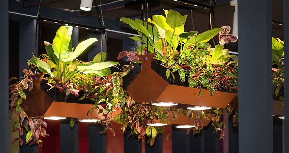 Close-up image of Hikari SQ integrated in a hanging garden in conference room